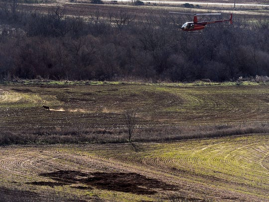 Hunters chase after a feral hog from a helicopter in Fisher County.