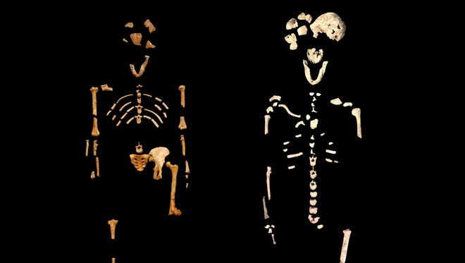 """Researchers found the most complete skeleton of early hominins in a South African cave system since the discovery of the skeleton dubbed Lucy in 1974.  The """"Lucy"""" skeleton (left) is at left. The new discover, Neo, is at right."""