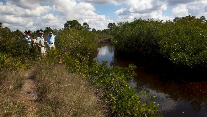 Bill Byle, Carl Spirio, Maria Loinaz, Tim Liebermann and Kirby Wolf view Yucca Pens Creek during a scientific survey of tidal creeks of Charlotte Harbor for restoration project recently along Burnt Store Road in Punta Gorda.