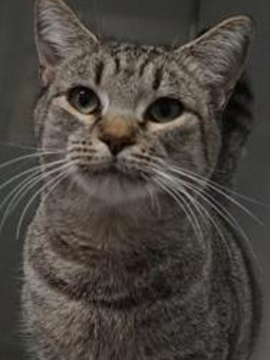 Glaydyn is a 2-year-old tabby. She is a sweet and loving