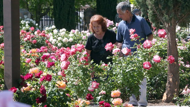 "Irma and Fernando Jaime of El Paso tour the Municipal Rose Garden at 1702 N. Copia St. for the first time Saturday in Central El Paso. Now in its peak bloom, the garden boasts thousands of flowers displaying a variety of colors. According to the city's website, master gardeners planted 74 new rose bushes this year. Irma Jaime said the garden was ""something we've been missing many years."" The garden is open daily from 8 a.m. to 6 p.m. until Nov. 30. Visitors can enter for free."