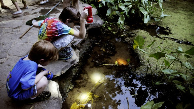 """The """"Insects of the Night"""" program at Warner Nature Center on Friday is a fun way to explore nature."""