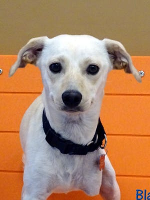 Pet of the Week: Blanco