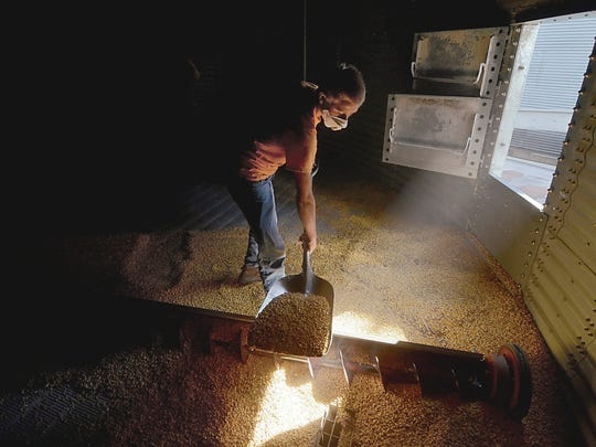 In this July 7, 2017 photo, Evan Burbrink, 14, shovels corn into a vent as he and his father, BE N AG, co-owner Brad Burbrink, work together to clean out the grain bin at the farm in southeast Vigo County near Blackhawk, Ind. Nearly every day, two semi-loads of food-grade corn leave the BE N AG Family Farm from southern Vigo County en route to an Azteca milling site in Evansville. Sold under the Mission Brand name, the corn chips can be found at stores such as Walmart.