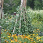 Flowers and vegetables grow in harmony together at Park Place.
