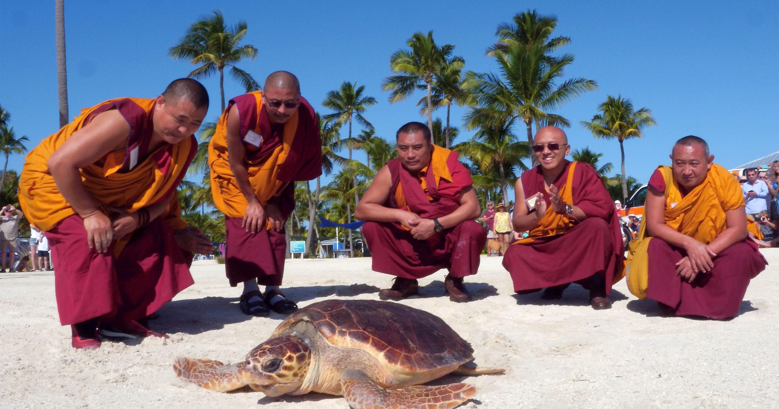 Tibetan monks at turtle release, puppy rescue 911: News from around our 50 states