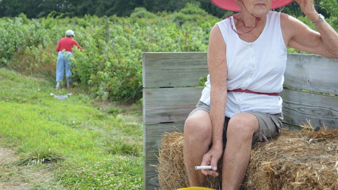 Dottie Burke takes a hayride back to her car after picking fresh blueberries at Parsons Farm.