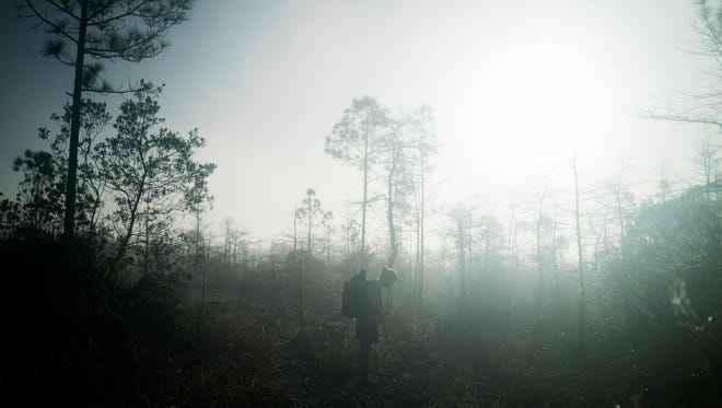 On the third day of her hike, Gretchen Matt stops in the early morning mist and looks down at the dry land. She just finished hiking through the Black Lagoon, the deepest section of water encountered in Big Cypress National Preserve.