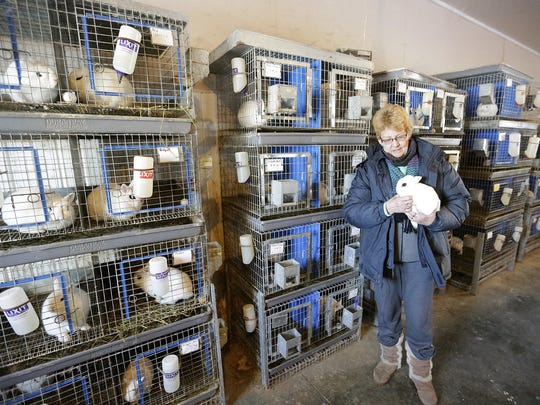 Rabbit breeder Patty Percy of Eden holds one of her