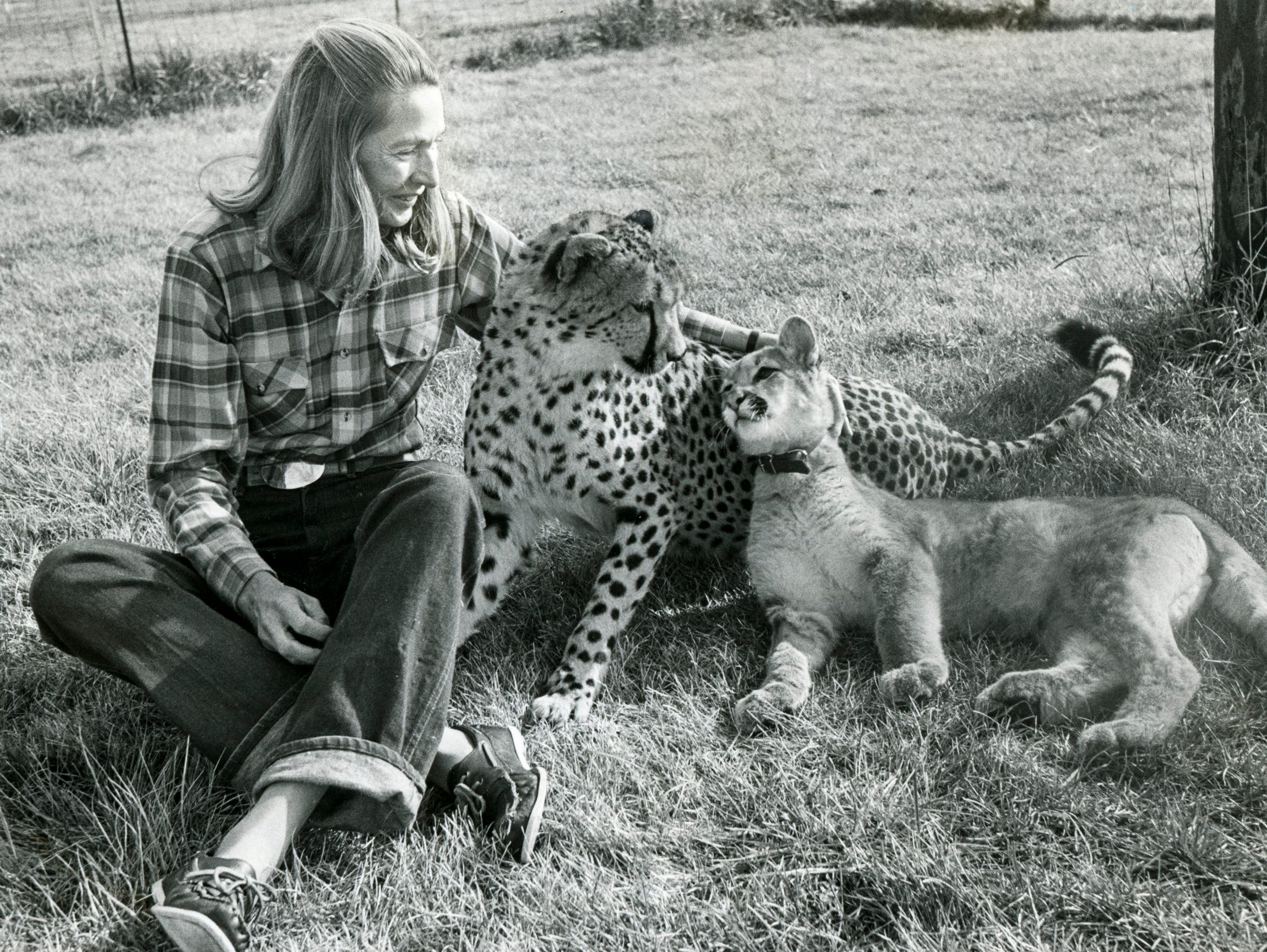 Cathryn Hilker looks after her 20-month-old cheetah,