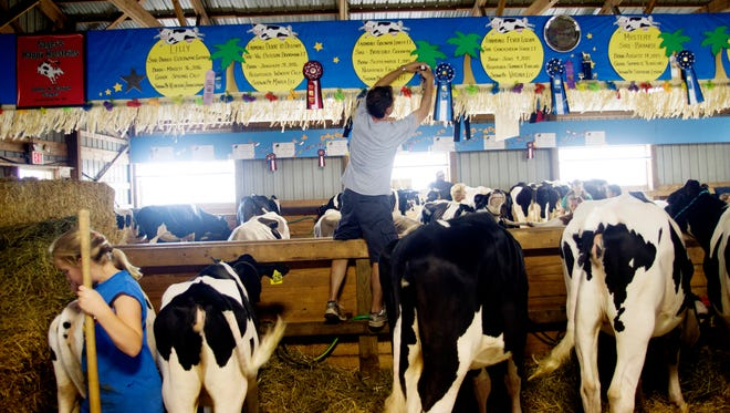 The cows come home for the Ozaukee County Fair, which begins Aug. 1.