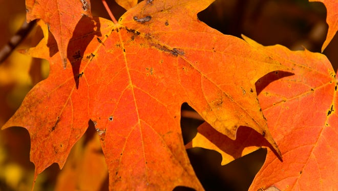 While some areas of Ohio may soon see peak fall colors, the Sandusky and Ottawa county region could have peak colors delayed by warm temperatures.