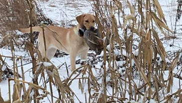 Engberg: Hunt pheasants until end of March