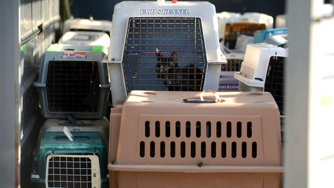 Around 200 cats are removed from a home in the 4000 Block of Bettian Avenue and loaded into a horse trailer on Monday in Milton as Santa Rosa County Sheriff's Deputies execute a search warrant for animal related violations.