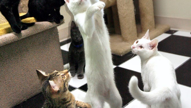 Learn to relax with the Cattery's Na-meow-ste Cat Yoga at 6:30 and 7:30 p.m. Oct. 30. at Disc-Go-Round, 5734 McArdle Rd A.  Yoga and cat enthusiasts will exercise while adoptable kittens roam the makeshift yoga studio.  Jenlyn Myers will teach yoga with a twist, adding poses such as Downward-facing Cat and Purramid Pose.  RSVP is required because space is limited. For more information on the $20 event, email samantha@thecatterycc.org.
