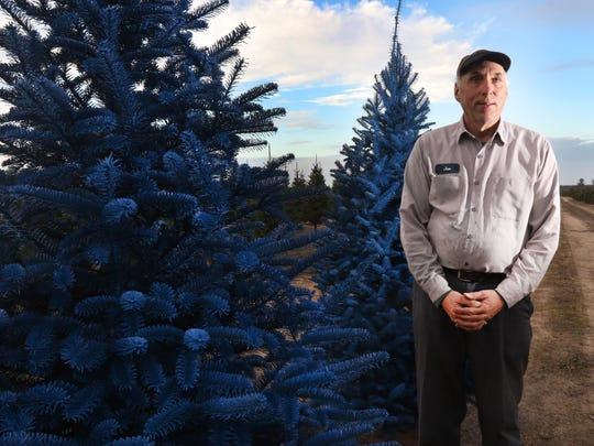 Jan Wolosek, co-owner of the Wolosek Christmas Tree Farm near Wisconsin Rapids, stands next to trees that have been painted blue.
