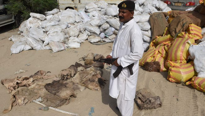 A Pakistani custom official stands guard beside confiscated donkey hides  in Karachi that were set to be illegally exported to China, on April 27, 2017.