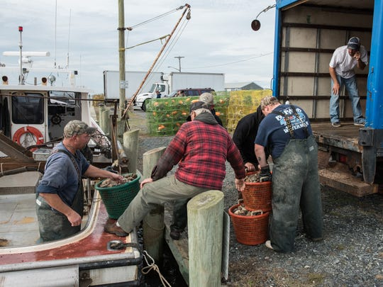 Several watermen work to offload several baskets of oysters from their fishing vessel in Saxis, Va., on Thursday, Nov. 12.