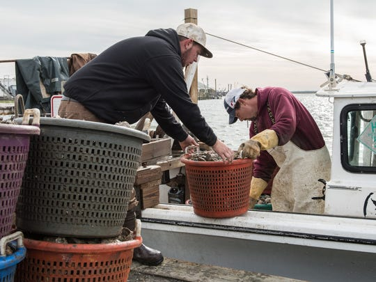 Tyler Williams, left, and Josh Williams offload several baskets of oysters from their fishing boat in Saxis, Va., on Nov. 12.
