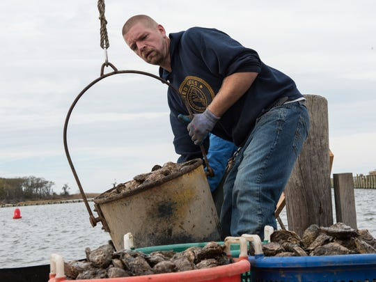 Travis Marshall of Sanford works to offload oysters from a fishing boat in Saxis, Va., on Thursday, Nov. 12.