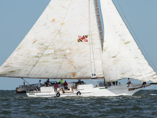 Crew members and passengers of the Thomas Clyde compete against other boats during the 2016 Skipjack Race on Monday, Sept. 5.