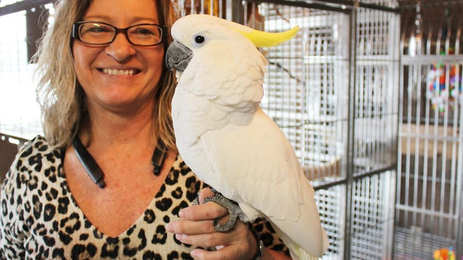 Shellie Hochstetler of Cockatoo Ranch in White Pigeon, with one of her nearly 40 cockatoos that are available for adoption.
