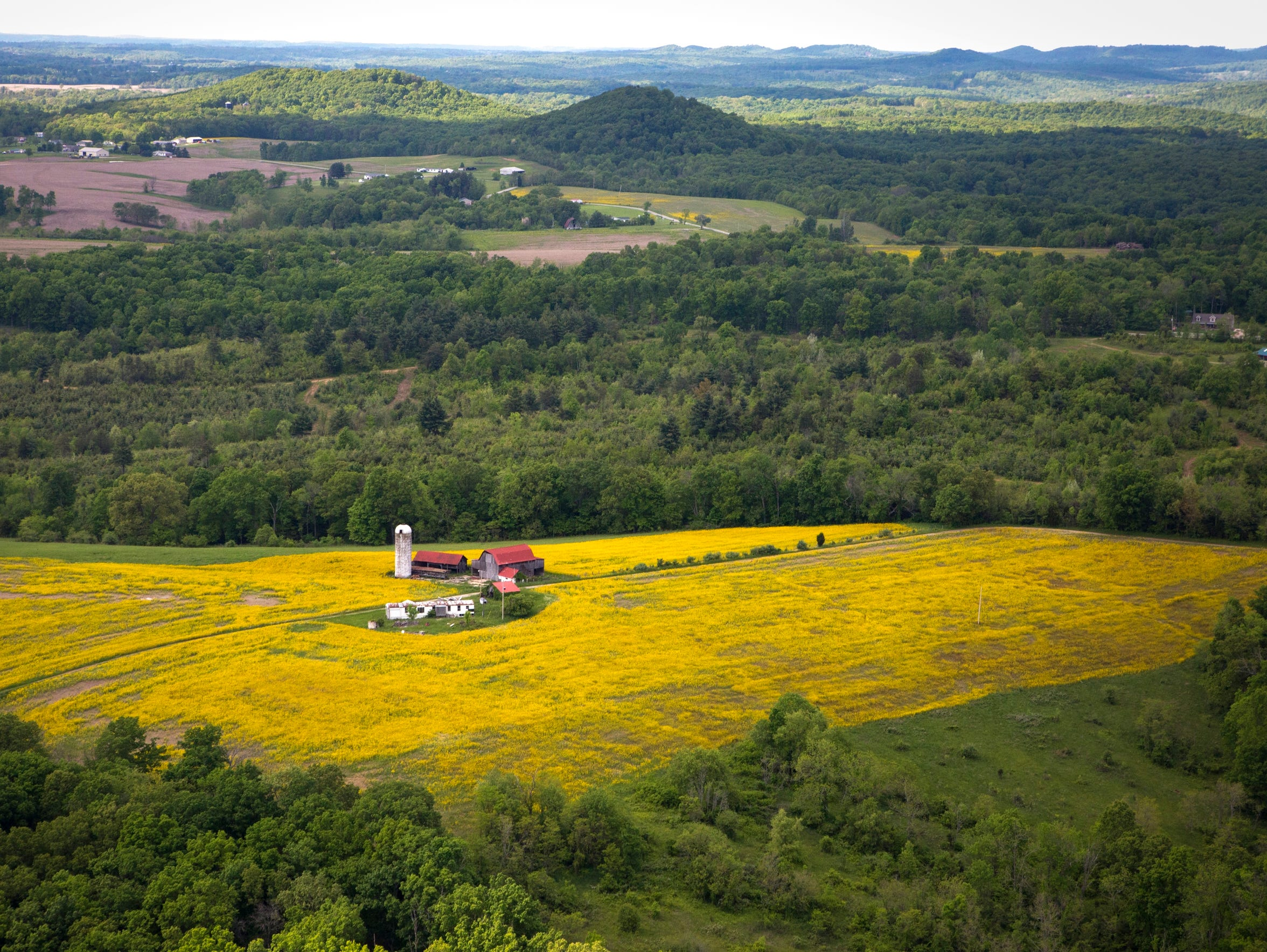 May 13, 2016: Canola fields are seen from above in