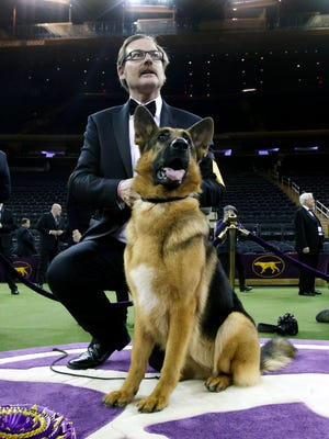 A German Shepard named 'Rumor' stands with his handler Kent Boyles after being awarded Best In Show during the 141st Westminster Kennel Club Dog Show at Madison Square Garden in New York, New York. The annual competition features hundreds of dogs from around the country.