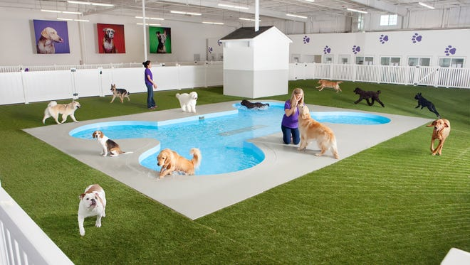 This undated artist rendering provided by Classic Communications courtesy of ARK Development shows Paradise 4 Paws, a holding area for dogs in a new luxury animal terminal planned for New York's JFK Airport.