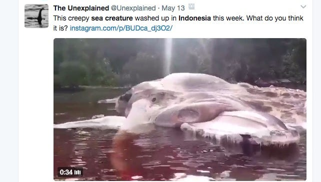 A massive sea creature that washed up in Indonesia is likely a whale, according to scientists.