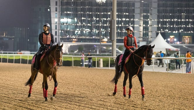 Yu Change and On the Rocks train for the UAE Derby at Meydan.