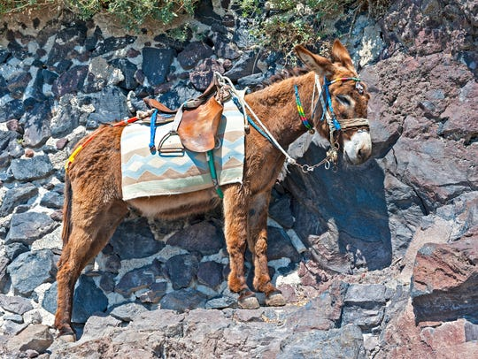 """""""The Santorini donkeys are one of the iconic features of the island and we are joining with the Donkey Sanctuary to urge guests to use their services responsibly."""""""