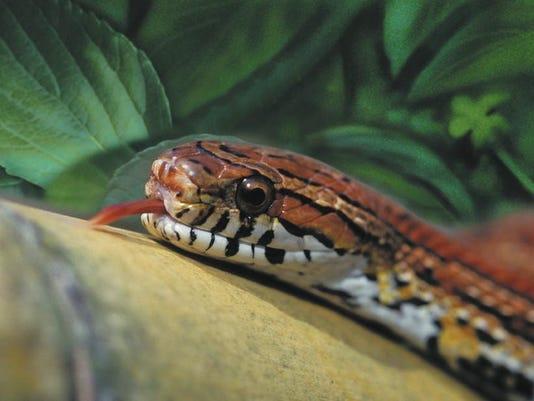 CAL_Snake