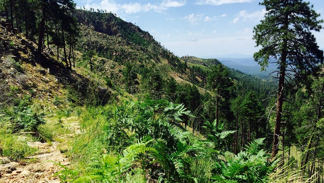 The views are spectacular from this segment of Railroad Tunnel Trail descending from Rim Road atop the Mogollon Rim.