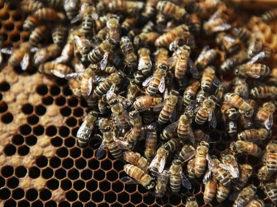 honeybee ky
