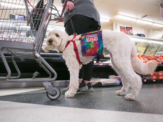Diann Jones shops at Acme in Middletown with her service dog, a Golden Doodle named Yadier.