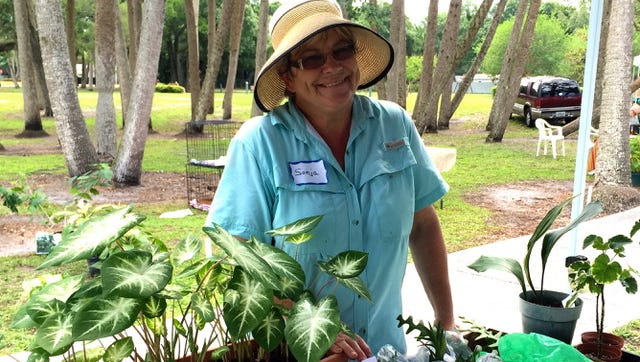 Second Vice President Sonja Jemison will have new cuttings available, along with household treasures and plenty of plants at the Mega Yard and Plant Sale at the Garden Club of Fort Pierce on Oct. 28.