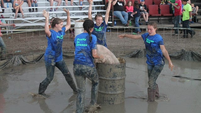 Teams of four have one minute to get the south end of a pig into a barrel at the Chouteau County Fair's pig wrestling contest.