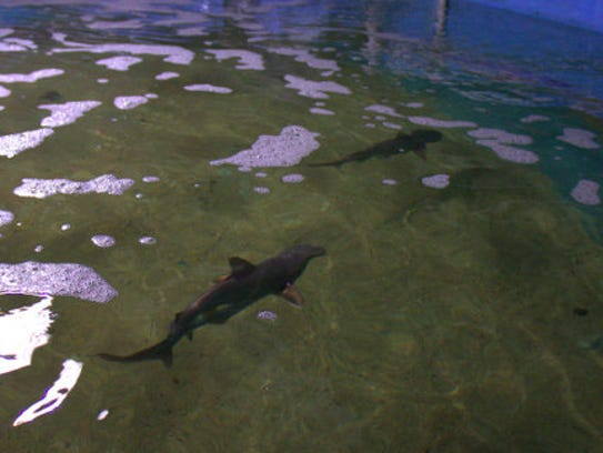 Two of seven live sharks seized from a LaGrangeville