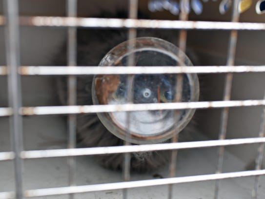 A police animal transportation cage keeps this stray