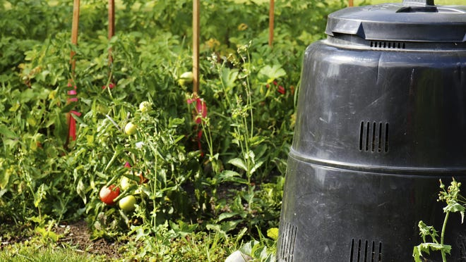Compost can be used when planting or tilling or as a mulch.
