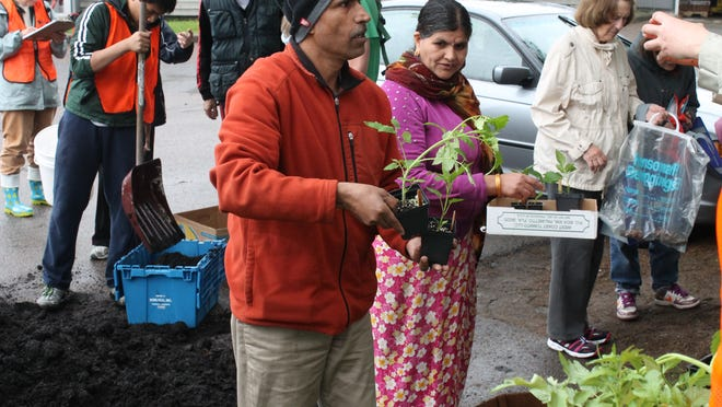Locals choose plants to take to home.