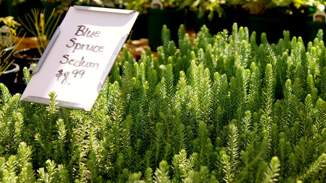 By choosing fall-friendly plants, your fall garden will thrive.
