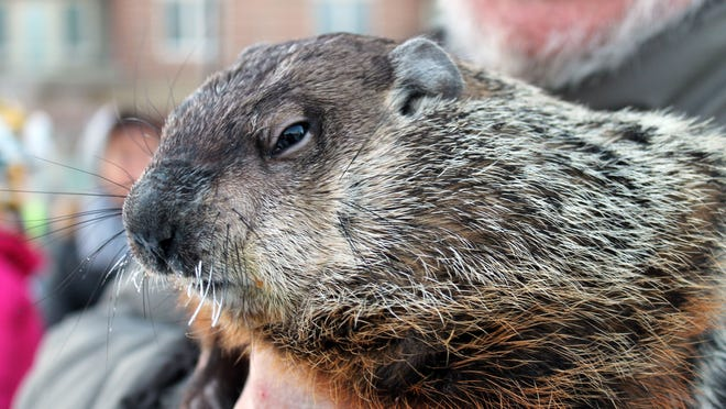 Jimmy the Groundhog did not see his shadow and predicted an early spring at Cannery Square in Sun Prairie on Monday, Feb. 2, 2015.