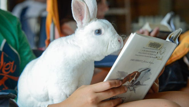 Cayley Boian reads a book with her bunny Coolwhip, Tuesday July 22.