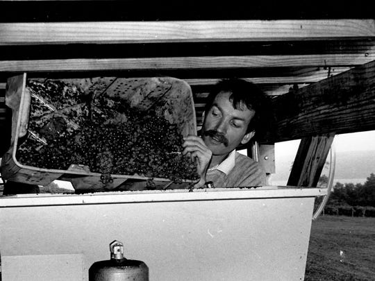 Michael Turback loading grapes into the crusher at Frontenac Point for his restaurant's locally made house wine in the early 1980s.