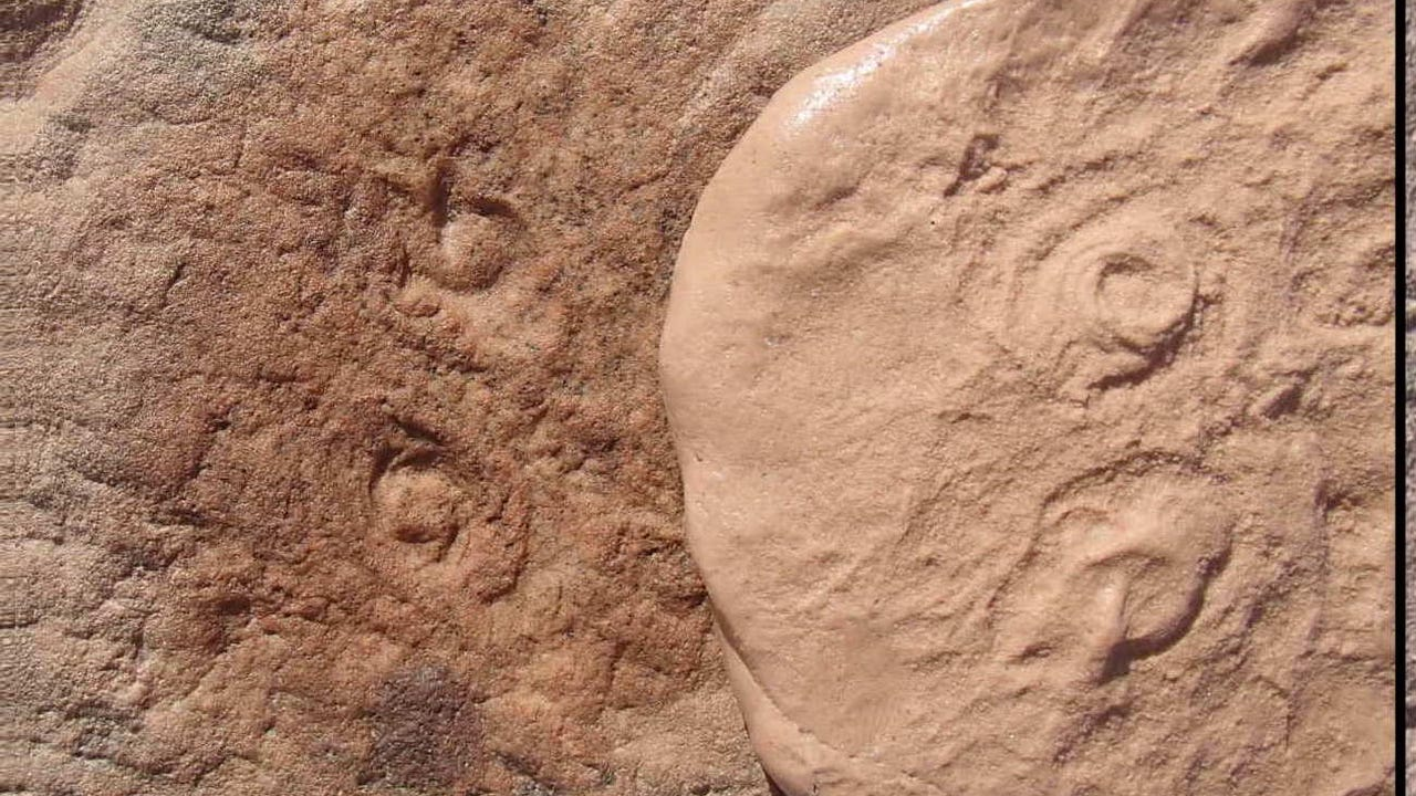 Fossils of creatures 500 millions years old discovered