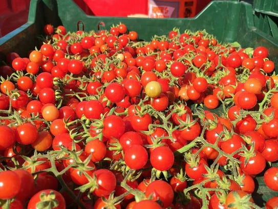 Tomatoes - like these from Harvest Moon Organic Farm