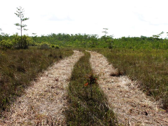 Huge trucks from Texas-based Burnett Oil Co. created paths when they conducted a seismic survey for oil and gas in the Big Cypress National Preserve in 2017. Environmental groups had sued to try to stop the work, alleging that the National Park Service did not review the plans carefully enough for potential environmental damage.