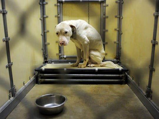 Ohio makes U S  humane society's Horrible Hundred list
